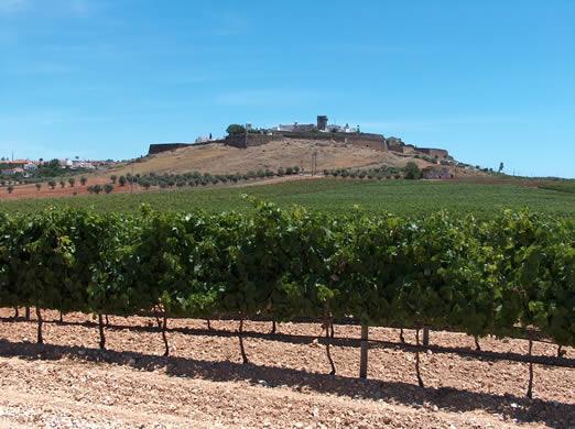 http://www.wineanorak.com/alentejo/estremoz_vineyard.jpg