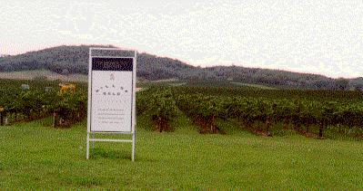 Mudgee Hill of Gold Vines