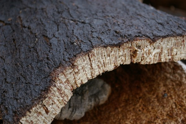 How is bark made