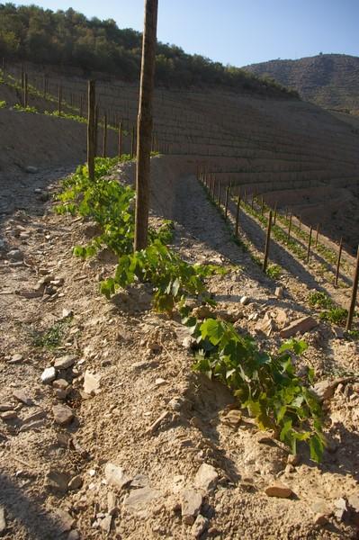 Wine Photographs Quinta Da Romaneira Douro