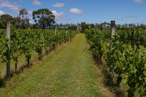 Martinborough New Zealand  City pictures : ... New Zealand government commissioned a report prospecting for new