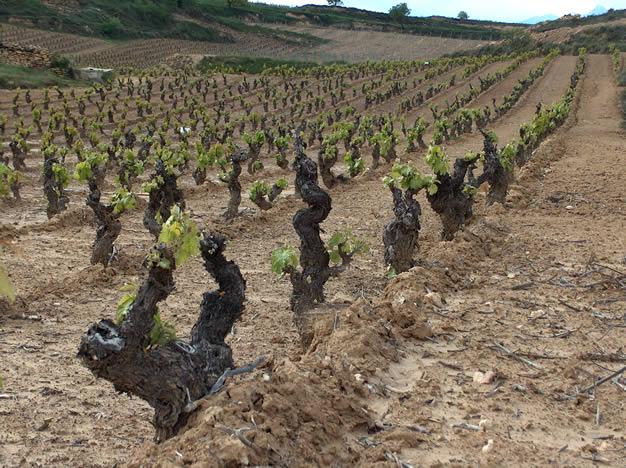 wine photographs from rioja  spain