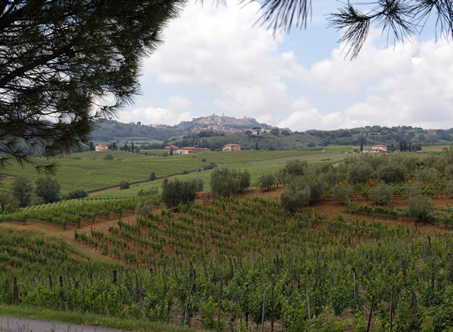 http://www.wineanorak.com/pictures/montepulciano1.jpg