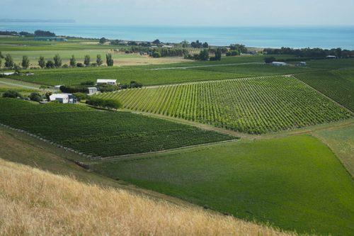 Hawke's Bay, New Zealand (10) Te Awanga Estate – Jamie Goode's wine blog